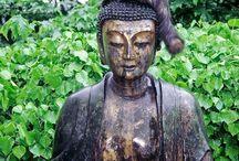 bouddha et chat