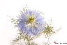 bloem van wilbert 2016