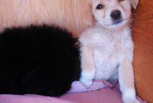 Mis pequeños / Estas son fotos de los perros que he rescatado y pienso que es lo mejor que puedo hacer,de verdad les aseguro que vale mucho la pena darles una oportunidad.