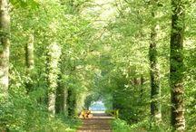 Wandelen bij Laren (Gld) / Rondom Laren (Gld) kun je mooi wandelen. Op landgoed Verwolde is er jaarrond wat te beleven. Van Dikke Boom tot oranjerie, mooie boerderijen en fraaie bossen. Ook op landgoed Ampsen is het mooi op de statige lanen rondom het kasteel.