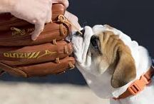 #Baseball&Dogs