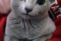 schattige kattenfoto's