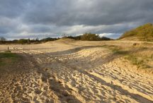 loonse-en drunense duinen / Natuur