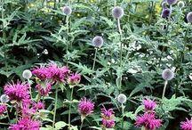 Plant pairs