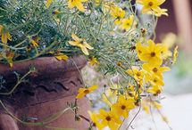 Drought tolerant  / by Paige Silsby