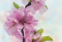 pin çiçek