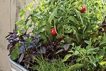 """Gardening + Yard Care / Ideas & tips for growing flowering plants, herbs, & vegetables. (For landscaping inspiration, see """"Home Design & Decor""""  & """"Beautiful Places & Spaces"""" pinboards.)"""