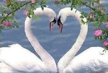 Love, feelings ... - Любовь, чувства... / Love, feelings ... photo, people, expression of feelings, poems - Любовь, чувства ... фото, людей, выражение чувств, стихи