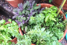 Herbs & Spices & Oils & Succulents / by Kim Bricko