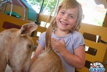 Nos animaux - La mini ferme