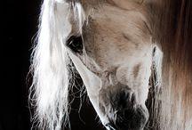 Ponies <3