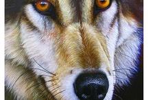 Miradas de animales / No son fotografías aunque lo parezcan , son ilustraciones de Jürek Zamoyski. Obras de arte maravillosas en las que podemos disfrutar de la fuerza y la intensidad de las miradas de los animales.