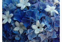 ocean blue flowers and random