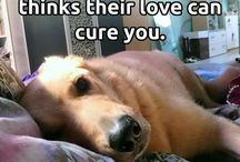 Dog Quotes / Dog Quotes / sayings / inspiration / motivation / funny / humour /