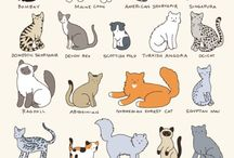 All Cat Breeds / Please,insert material related to the various breeds of domestic cats, from the most common to the most unusual.