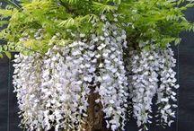wonderfull bonsai