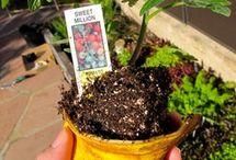 Gardening plants / How to grow etc