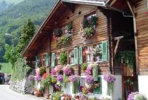 Цветы и дома
