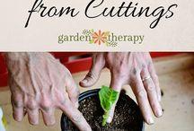 Growing, cuttings