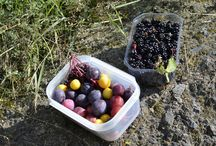 Food foraging / Wild edible plants and more