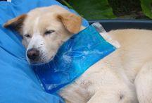 Hundefotos - lustig und schön / Hundefotos aus dem Leben unserer Hunde, mal lustig, mal traurig, aber immer schön