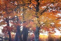 The Delights of Autumn / Autumnal images and quotes
