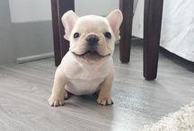 Future puppy
