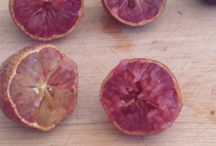 Blood (Red Flesh) limes