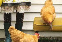Chickens :D / Chickens / by Nikki Zupp