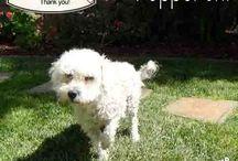 Pet Adoption & Rescue / Animal Rescues