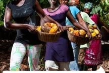 Cacao initiatives