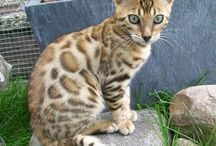 Petsies / Cute pictures of wild animals and pets.