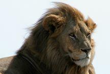 On Safari with Warrior Trails
