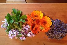 Plant & Share Products / Herbal products created by Plant & Share and my garden