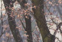 wiosna / o... wiośnie!