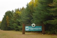 Visit Algonquin with MLI / As one of the largest of Ontario Parks, Algonquin is very diverse and offers a variety of activities for everyone.  There are many self guided interpretive trails which range from easy to difficult, from 1 km to nearly 11 km, and through a variety of landscapes with beautiful lookouts, lakes, and forests.  For those who wish to discover and learn more about the natural and cultural history of the park, there are many opportunities available at the Visitor Centre.