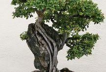 Bonsai ; Ikebana