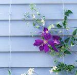 Garden Ideas & Garden Design / Beautiful garden ideas, flower bed designs, fence ideas, cottage garden ideas and other dream gardens to drool over.