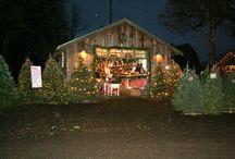 northern lights christmas tree farm labschutte0448 on - Northern Lights Christmas Tree Farm