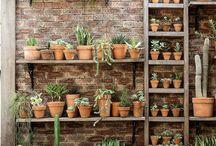 植木鉢ディスプレイ