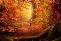 Autumn / by Gwendolyne Spare