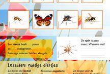 004a4 | Insecten