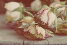Wilting Flowers