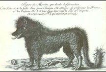 Die Bestie (La bete) vom Gevaudan
