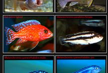 Aqua life / all about aquariums