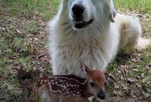 animals / animal pic