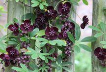 Garden - Vines & Creepers