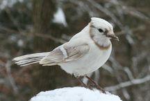 Wild birds color mutations