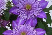 Virágok / Virágok a lakásban, kertben, élőhelyükön