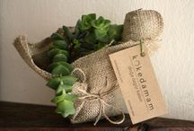 Have a nice week... / kokedama new decor gift shop succulent nature